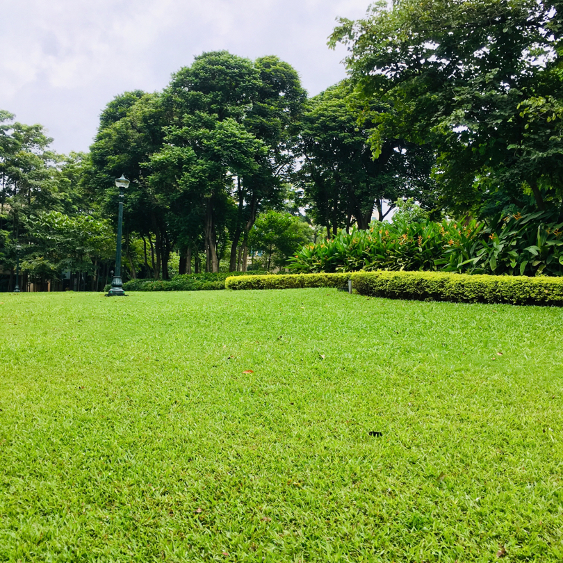 Lawns and lamp
